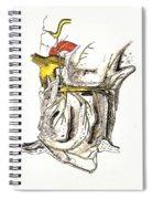 Lateral Wall Of Nasal Cavity Spiral Notebook