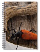 Laughing Beetle Spiral Notebook