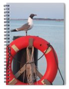 Laughing Gull At Lewes Spiral Notebook