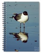 Laughing Gull Spiral Notebook