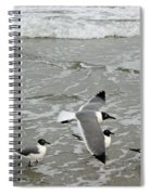 Laughing Gulls Iv- Follow Me Spiral Notebook