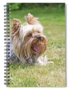 Laughing Yorkshire Terrier Spiral Notebook