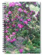 Laurel Mountain Tree Spiral Notebook