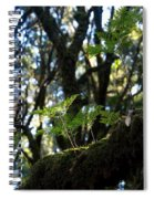 Laurisilva 2 Spiral Notebook