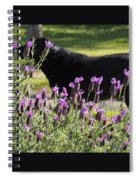 Lavender And Black Lab Spiral Notebook