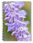 Lavender Blooms Spiral Notebook