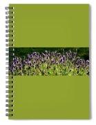 Lavender Pano Spiral Notebook