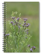 Lavender Purple Verbena Wildflowers  Spiral Notebook