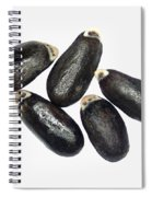 Lavender Seeds Spiral Notebook