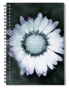 Lawn Daisy - Toned Spiral Notebook