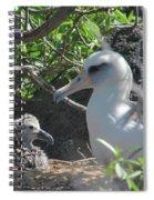 Laysan Albatross Chick Spiral Notebook