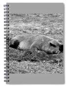 Lazy Hog Spiral Notebook