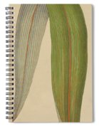 Leaf Of A Mountain Cabbage Tree Or Bush Flax Spiral Notebook