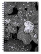 Leaf Pools Spiral Notebook