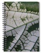 Leaf Variegated 1 Spiral Notebook