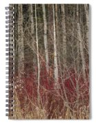 Leafless Color Spiral Notebook