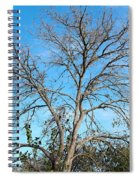 Leafless In Autumn Spiral Notebook
