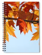 Leaves Autumn Orange Sunlit Fall Leaves Blue Sky Baslee Troutman Spiral Notebook