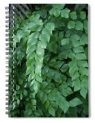 Leaves Cascading Spiral Notebook