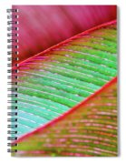 Leaves In Color  Spiral Notebook