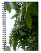 Leaves In Memorial Spiral Notebook