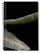 Leech Feeding On Tadpole Spiral Notebook