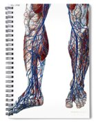 Leg Blood Vessels, Anatomical Spiral Notebook