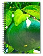 Lemon Or Lime Spiral Notebook
