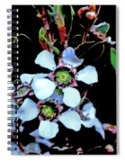 Lemon Scented Tea Tree  Spiral Notebook