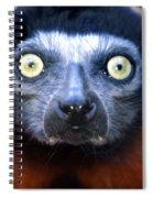 Lemur Glare Spiral Notebook