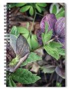 Lenton Rose Spiral Notebook
