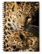 Leopard Cub Love Spiral Notebook