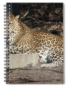 Leopard Relaxing Spiral Notebook