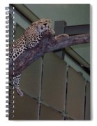 Leopard Tree Cat Preying Spiral Notebook