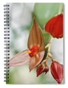 Lepanthes Maduroi Orchid Spiral Notebook