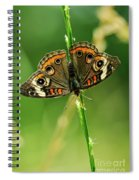 Lepidoptera Spiral Notebook