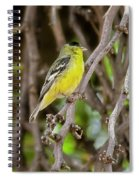 Lesser Goldfinch H57 Spiral Notebook
