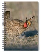 Lesser Prairie Chicken Spiral Notebook