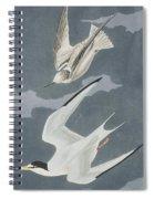 Lesser Tern Spiral Notebook