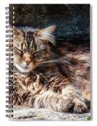 Let Me Sleep... Spiral Notebook
