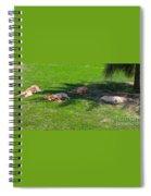 Let Sleeping Dogs Lie Spiral Notebook