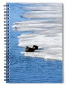 Let Sleeping Ducks Lie Spiral Notebook