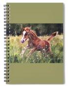 Levi Spiral Notebook