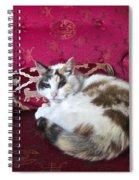 Librarian Spiral Notebook