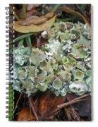 Lichen On Dead Branch Outer Banks North Carolina Usa Spiral Notebook