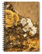 Lichen On The Piran Walls Spiral Notebook