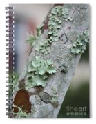 Lichens 2 Spiral Notebook