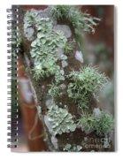 Lichens 4 Spiral Notebook