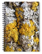 Lichens On Tree Bark Spiral Notebook