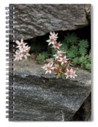 Life On Bare Rock - Pale Pink Succulents On The Wall Spiral Notebook
